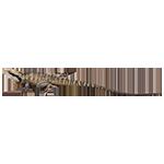 drago acquatico australiano